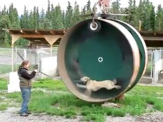 Собачий тренажер